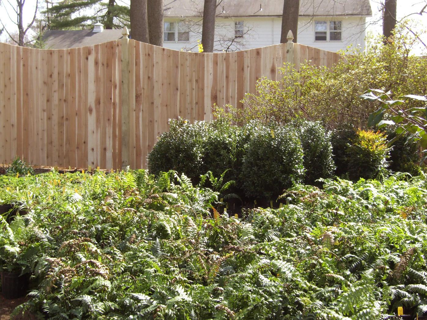 Wood Picket Fence